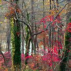Red remnants, Greenbelt Lake by nealbarnett