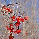 Jewels of Winter by Brenda Dow
