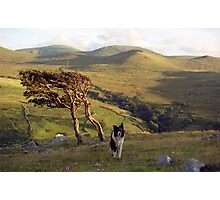 Indy on Dinas Photographic Print