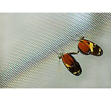 Butterfly in love in prison Photographic Print