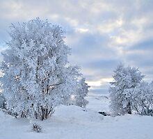 Winter Wonderland, Glencoe by Claire Tennant