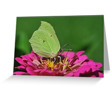 Butterfly III. Greeting Card