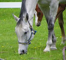 This is the Good Grass by MaryinMaine
