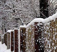 Winter fence by Bluesrose