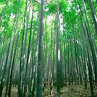 Bamboo in Spring, Arashiyama by hinting