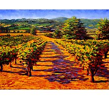 French Provençal Vineyard Photographic Print