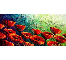 The Poppy Burst Photographic Print