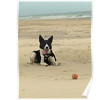 Baxter and the Ball Poster