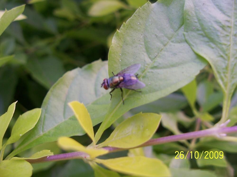 fly on a leaf  by risharoo