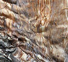 Melting Tree by Haydee  Yordan