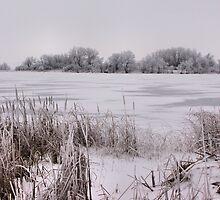 Winter Sky by Becky39