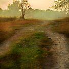 Path by zabcoloma