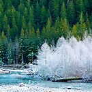 Frost Along the Nooksack River by lizalady