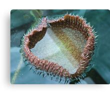Loveheart Lily Canvas Print