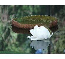 Amazon Waterlily Photographic Print