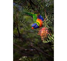 The Sweet Nectar Photographic Print