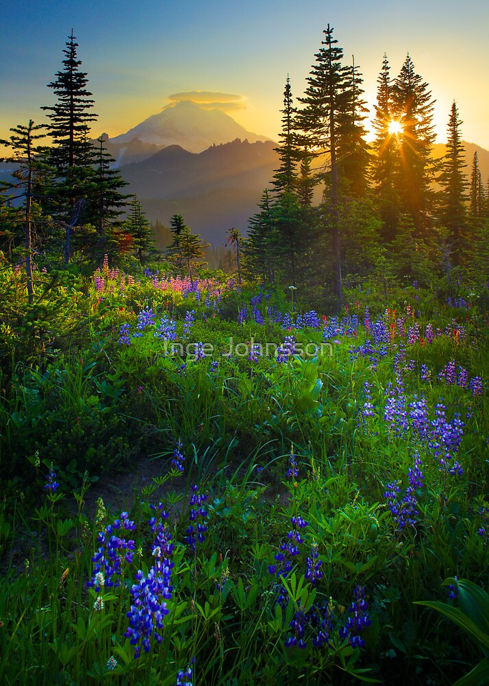 Mount Rainier Sunburst by Inge Johnsson