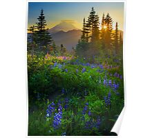 Mount Rainier Sunburst Poster