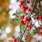 Berry Delight by JulieDanielle