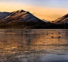 Wild Geese take flight from Derwent Water, Cumbria by Chris McIlreavy
