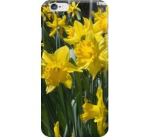 The Bounty of Spring iPhone Case/Skin
