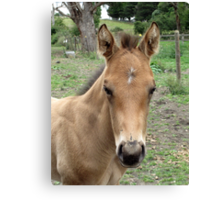 Meet Tex's Look-a-Like Brother Canvas Print