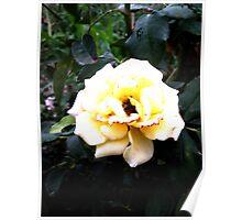 The little white rose returns Poster