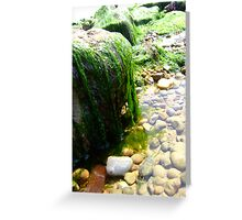 seaweed - hythe Greeting Card