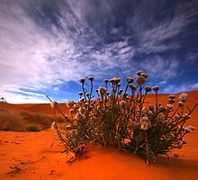 Perry sand dunes 2 by Rikki  Pool