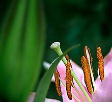 Pink Macro by GayeLaunder Photography
