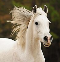 The White Stallion by Lover1969