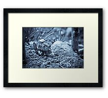 Dwarf Lost In The Enchanted Forest Framed Print