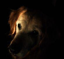 Portrait of Riley II by Jeff Stroud