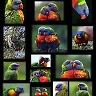Rainbow Lorikeets Collage by Lesley Smitheringale