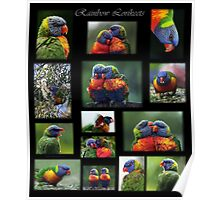 Rainbow Lorikeets Collage Poster
