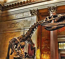 American Museum of Natural History by Andrea Rapisarda
