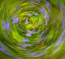 bluebell vortex by jonnybaker