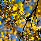autumn leaves by jonnybaker