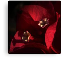 Morning Light on Scarlet Bougainvillea Canvas Print