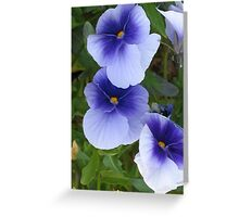 Light Blue Pansies Greeting Card