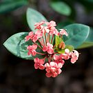 Winter Bloom - Tampa, Florida by rjhphoto