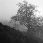 Glen Affric misty silhouette by PigleT