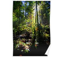 tall trees, Armstrong State Park Poster