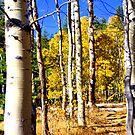 """Aspen Grove""  by Lynn Bawden"