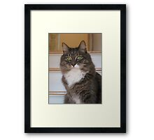 Green Eyes Look and Look Framed Print