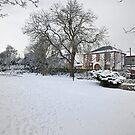 Snowy Garden by Tom Gomez