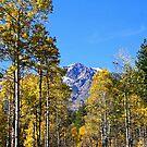"""`""""Mount Tallac & Aspens"""" by Lynn Bawden"""