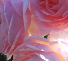Backlit Roses ~ Sweetly Romantic Sticker