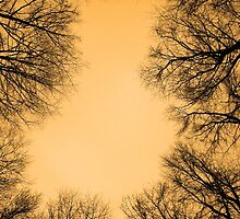 Circles in the Forest by GlennB