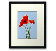 Delicate Red Poppies Vector Framed Print
